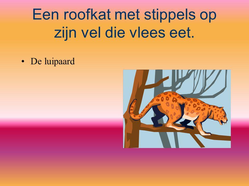 Een roofkat met stippels op zijn vel die vlees eet. De luipaard