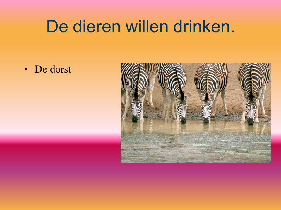 De dieren willen drinken. De dorst