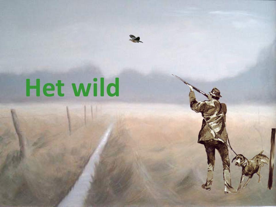 Het wild