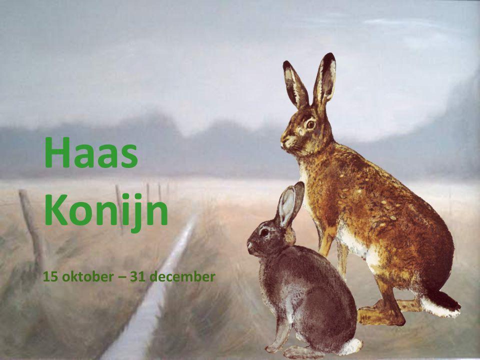 Haas Konijn 15 oktober – 31 december