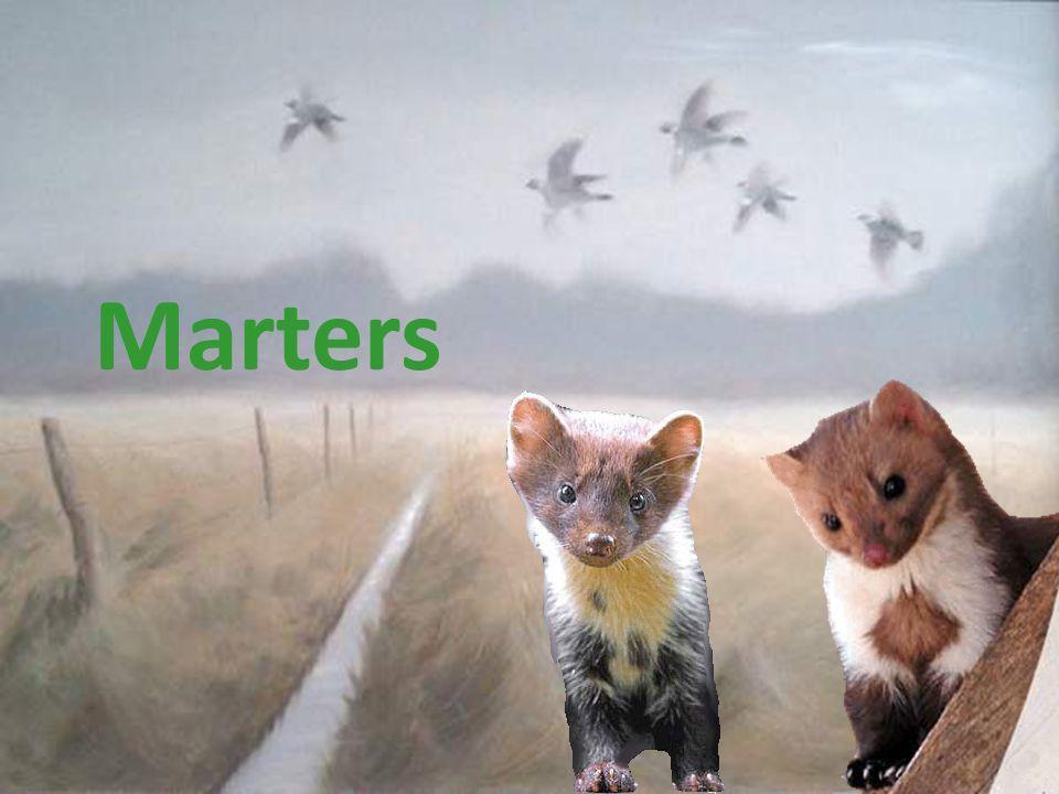 Marters