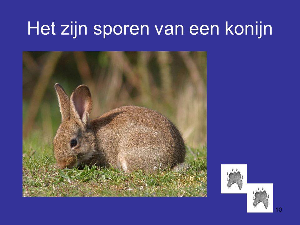 10 Het zijn sporen van een konijn