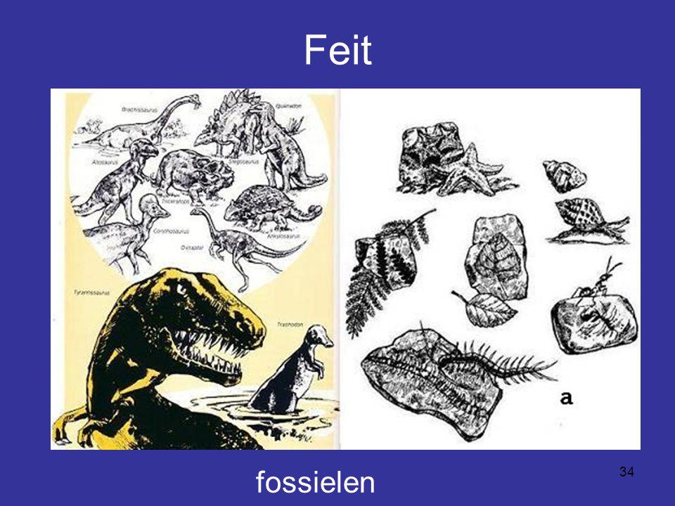 34 Feit fossielen
