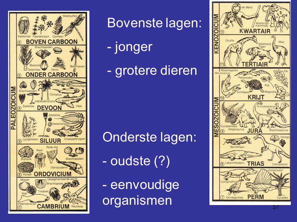 37 Onderste lagen: - oudste (?) - eenvoudige organismen Bovenste lagen: - jonger - grotere dieren