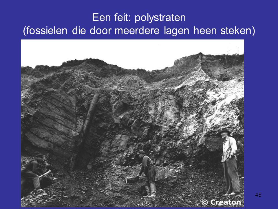 45 Een feit: polystraten (fossielen die door meerdere lagen heen steken)