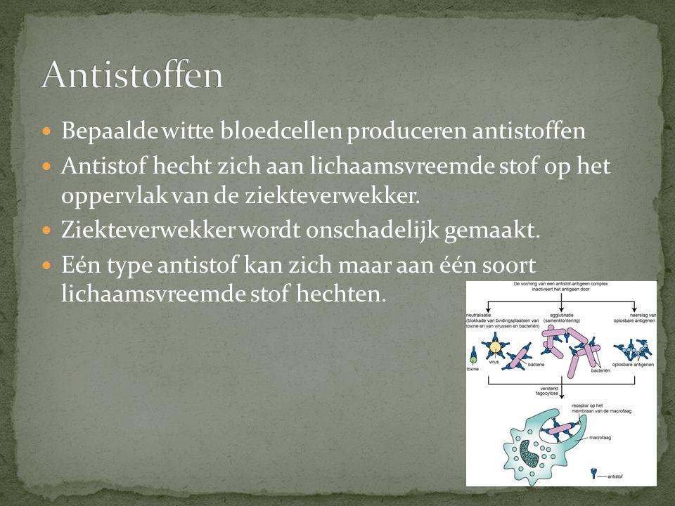 Bepaalde witte bloedcellen produceren antistoffen Antistof hecht zich aan lichaamsvreemde stof op het oppervlak van de ziekteverwekker.