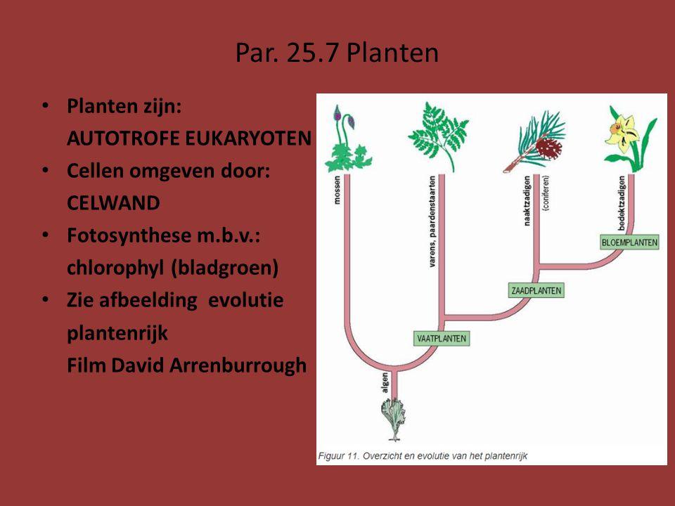 Par. 25.7 Planten Planten zijn: AUTOTROFE EUKARYOTEN Cellen omgeven door: CELWAND Fotosynthese m.b.v.: chlorophyl (bladgroen) Zie afbeelding evolutie
