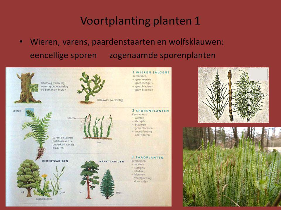 Voortplanting planten 1 Wieren, varens, paardenstaarten en wolfsklauwen: eencellige sporen zogenaamde sporenplanten