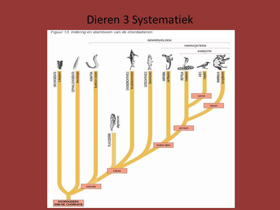 25.8.5 Vogels en Zoogdieren Eerste soorten vogels en zoogdieren: ontstaan uit bepaalde vormen van reptielen Pas na uitsterven Dinosauriërs (65-140 miljoen jaar geleden) namen vogels en zoogdieren de heerschappij over In het begin waren de verschillen uiteraard kleiner dan tegenwoordig Huidige reptielen koudbloedig Er waren ook warmbloedige dinosauriërsoorten die hun eieren uibroedden Er Fossielen gevonden die zowel lenmerken van reptielen als vogels hebben Bekendste: Archaeoteryx (afgietsel in biolokaal) Zie afbeelding volgende dia