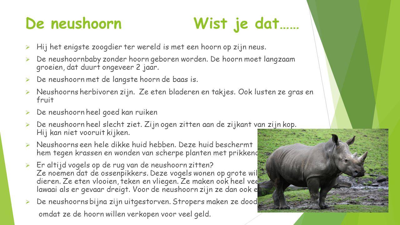 De neushoorn Wist je dat……  Hij het enigste zoogdier ter wereld is met een hoorn op zijn neus.  De neushoornbaby zonder hoorn geboren worden. De hoo