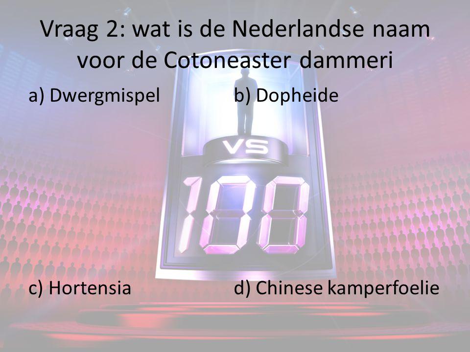Vraag 2: wat is de Nederlandse naam voor de Cotoneaster dammeri a) Dwergmispel c) Hortensia b) Dopheide d) Chinese kamperfoelie