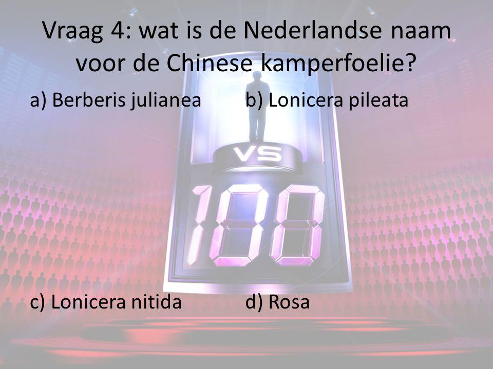 Vraag 4: wat is de Nederlandse naam voor de Chinese kamperfoelie.