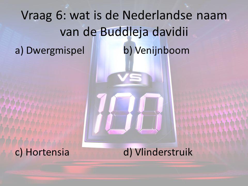 Vraag 6: wat is de Nederlandse naam van de Buddleja davidii a) Dwergmispel c) Hortensia b) Venijnboom d) Vlinderstruik