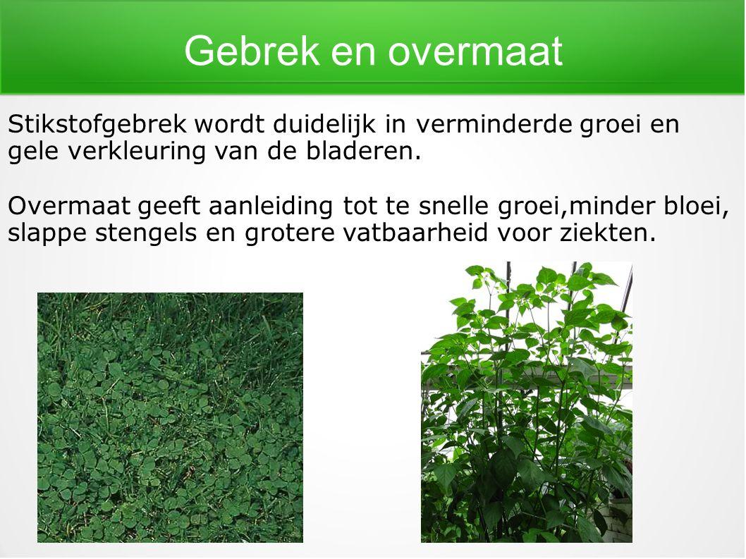 Gebrek en overmaat Stikstofgebrek wordt duidelijk in verminderde groei en gele verkleuring van de bladeren. Overmaat geeft aanleiding tot te snelle gr