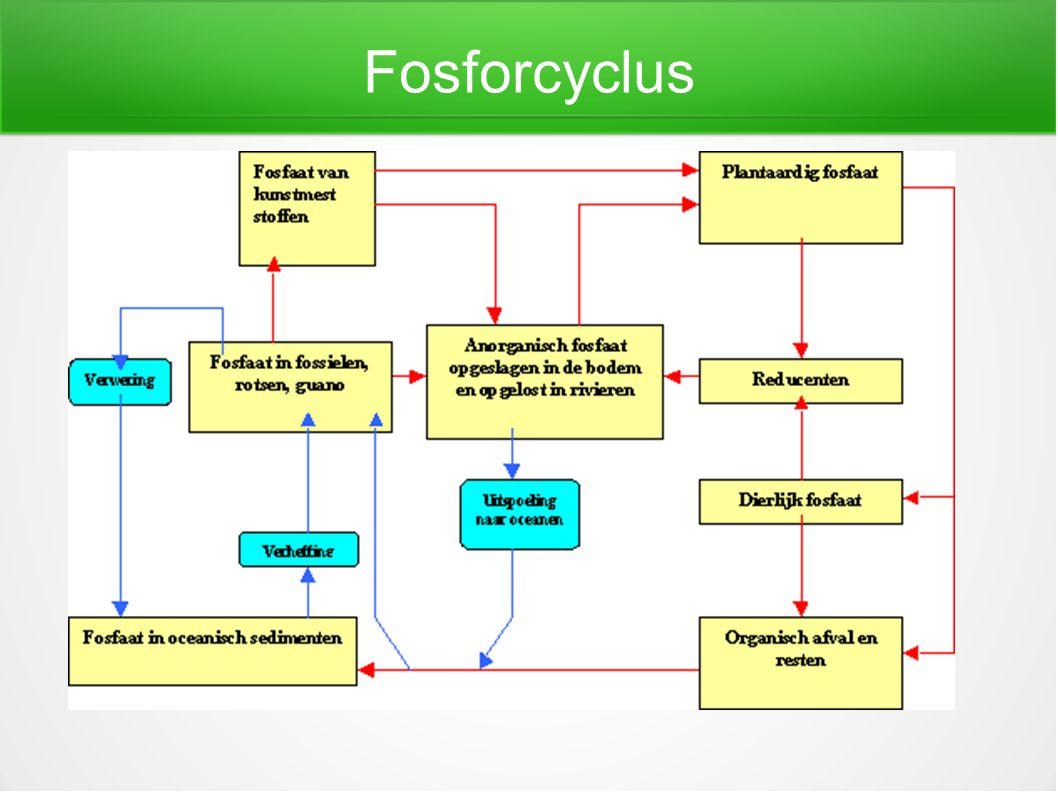 Fosforcyclus