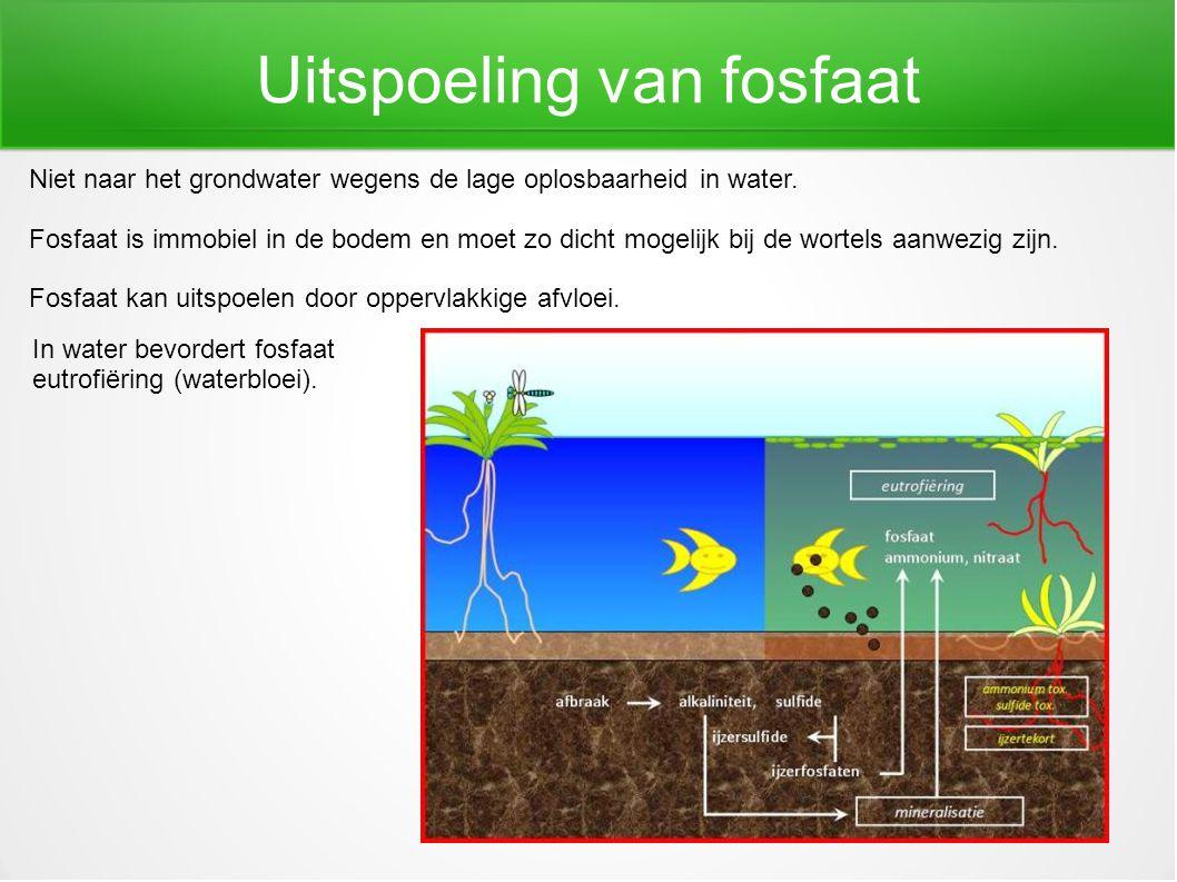 Uitspoeling van fosfaat Niet naar het grondwater wegens de lage oplosbaarheid in water. Fosfaat is immobiel in de bodem en moet zo dicht mogelijk bij