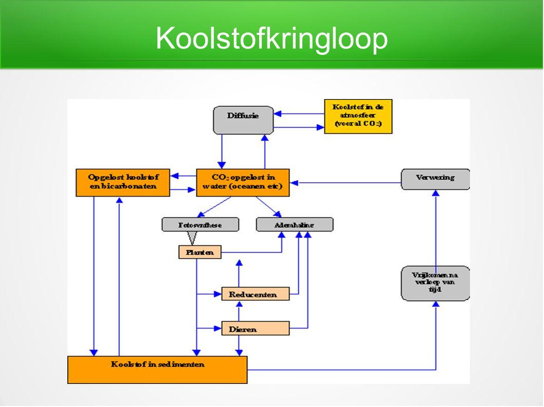 Fosfor Belangrijke rol bij ademhaling en energievoorziening.