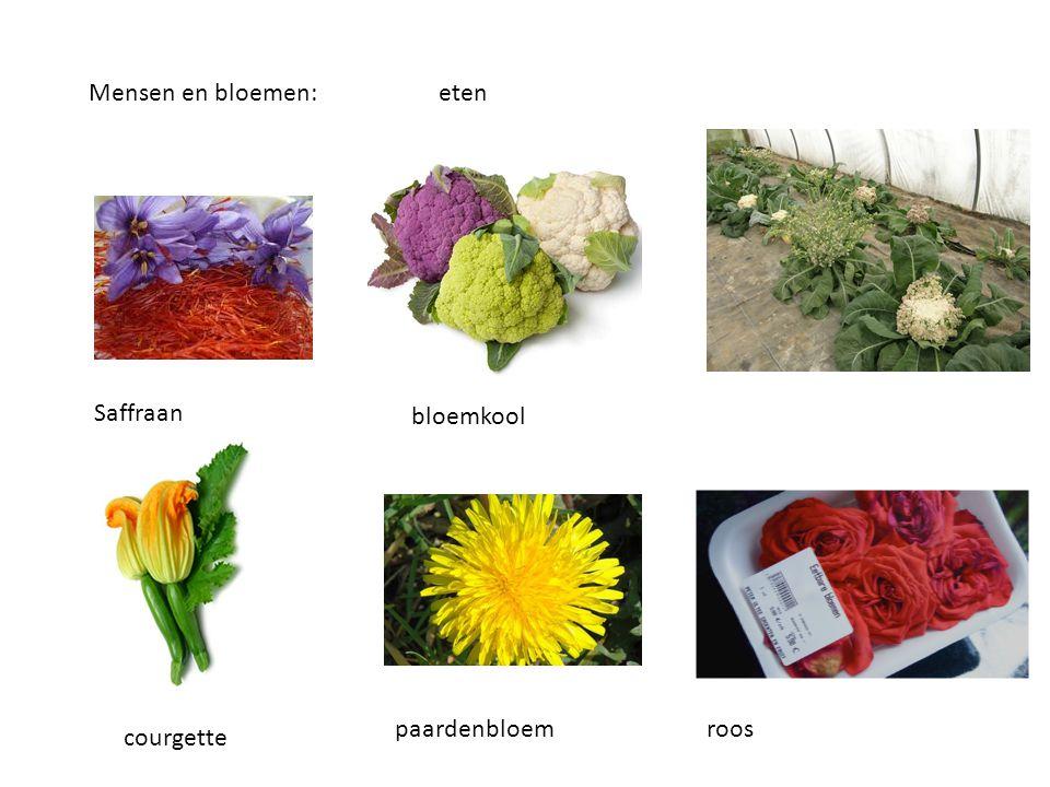Mensen en bloemen:eten Saffraan bloemkool courgette paardenbloem roos