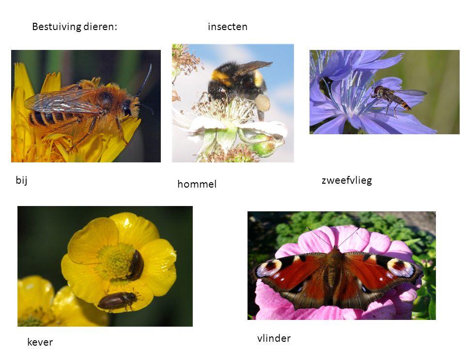 Bestuiving dieren:insecten bij hommel zweefvlieg kever vlinder