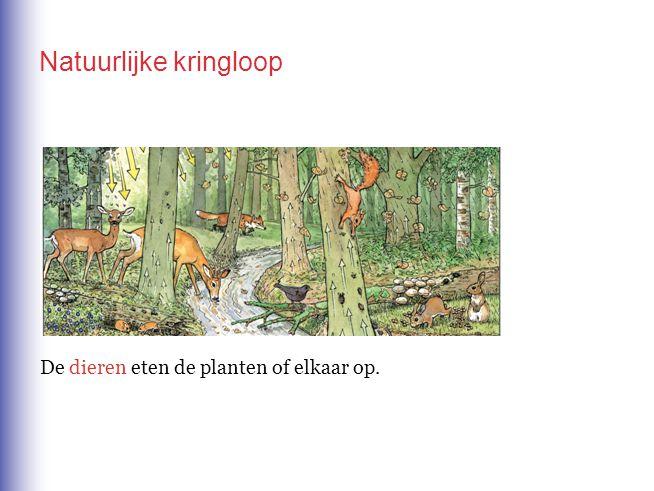 De dieren eten de planten of elkaar op. Natuurlijke kringloop