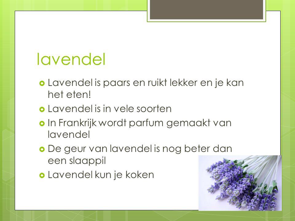 lavendel  Lavendel is paars en ruikt lekker en je kan het eten!  Lavendel is in vele soorten  In Frankrijk wordt parfum gemaakt van lavendel  De g