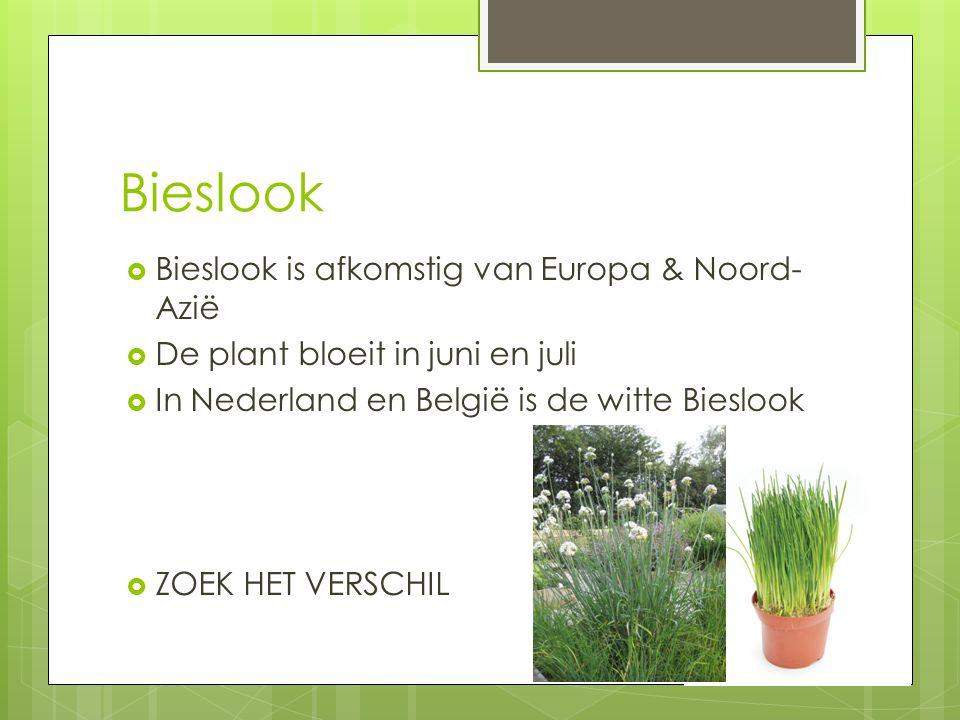Bieslook  Bieslook is afkomstig van Europa & Noord- Azië  De plant bloeit in juni en juli  In Nederland en België is de witte Bieslook  ZOEK HET V
