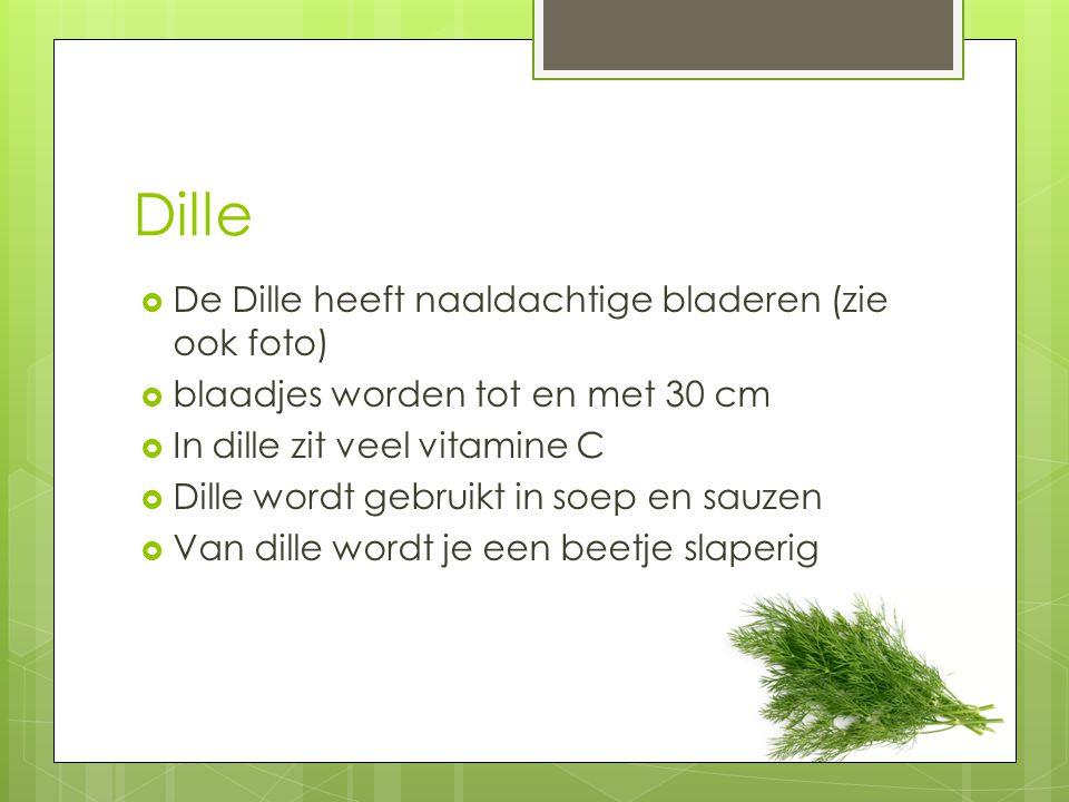 Dille DDe Dille heeft naaldachtige bladeren (zie ook foto) bblaadjes worden tot en met 30 cm IIn dille zit veel vitamine C DDille wordt gebrui