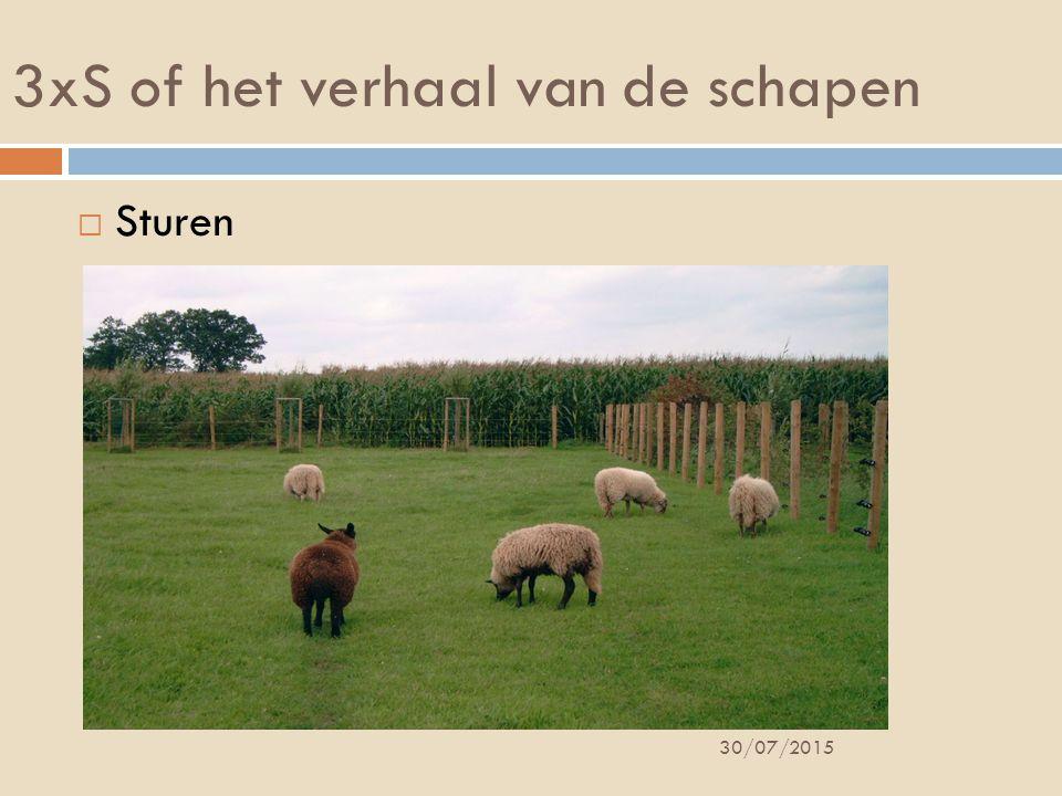 3xS of het verhaal van de schapen  Sturen 30/07/2015