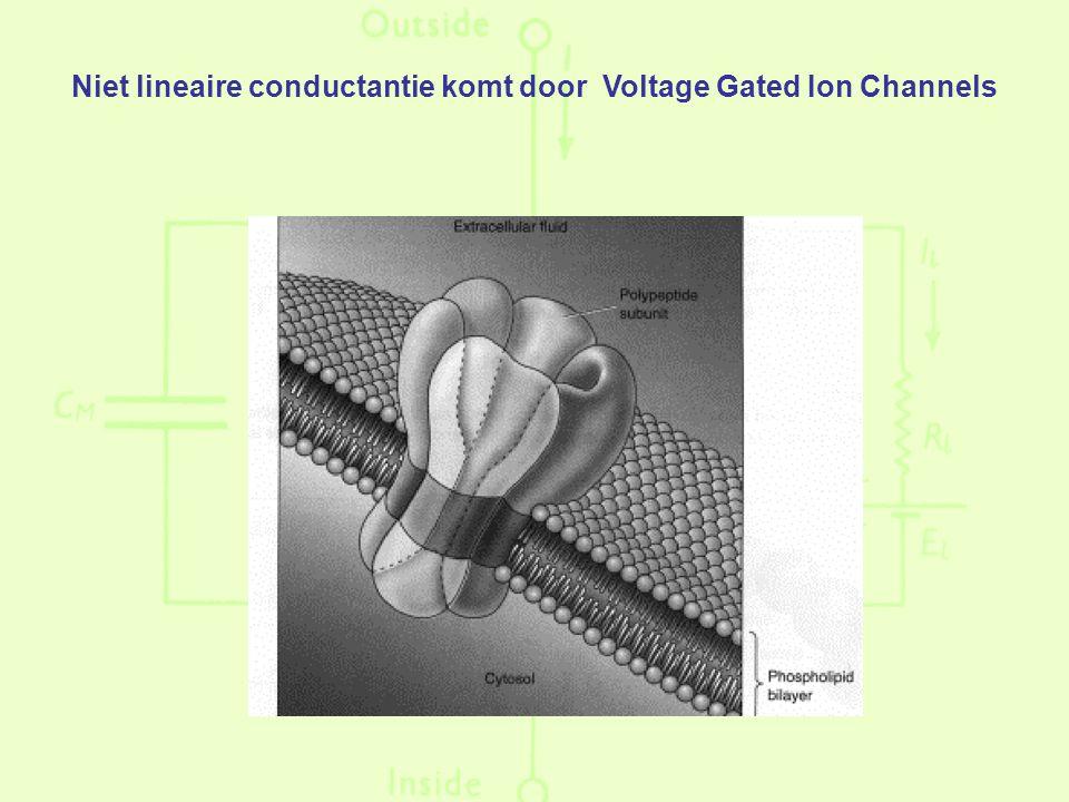 Niet lineaire conductantie komt door Voltage Gated Ion Channels