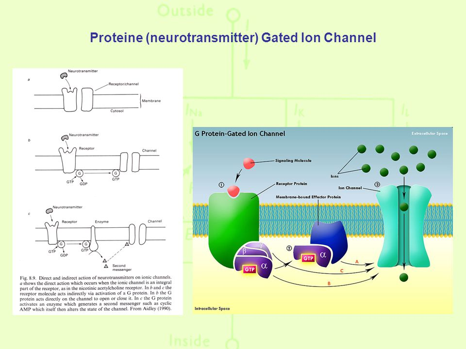 Proteine (neurotransmitter) Gated Ion Channel