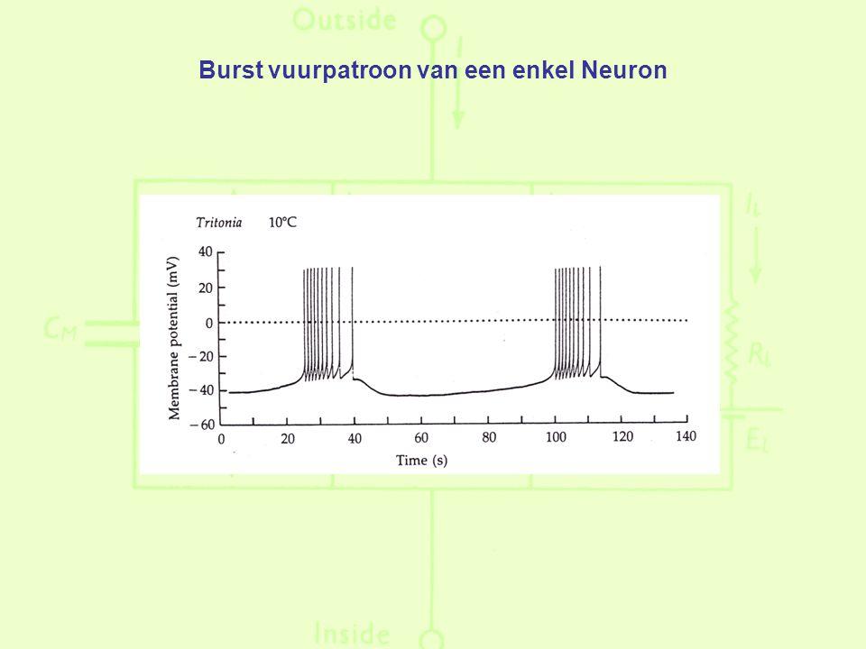 Burst vuurpatroon van een enkel Neuron