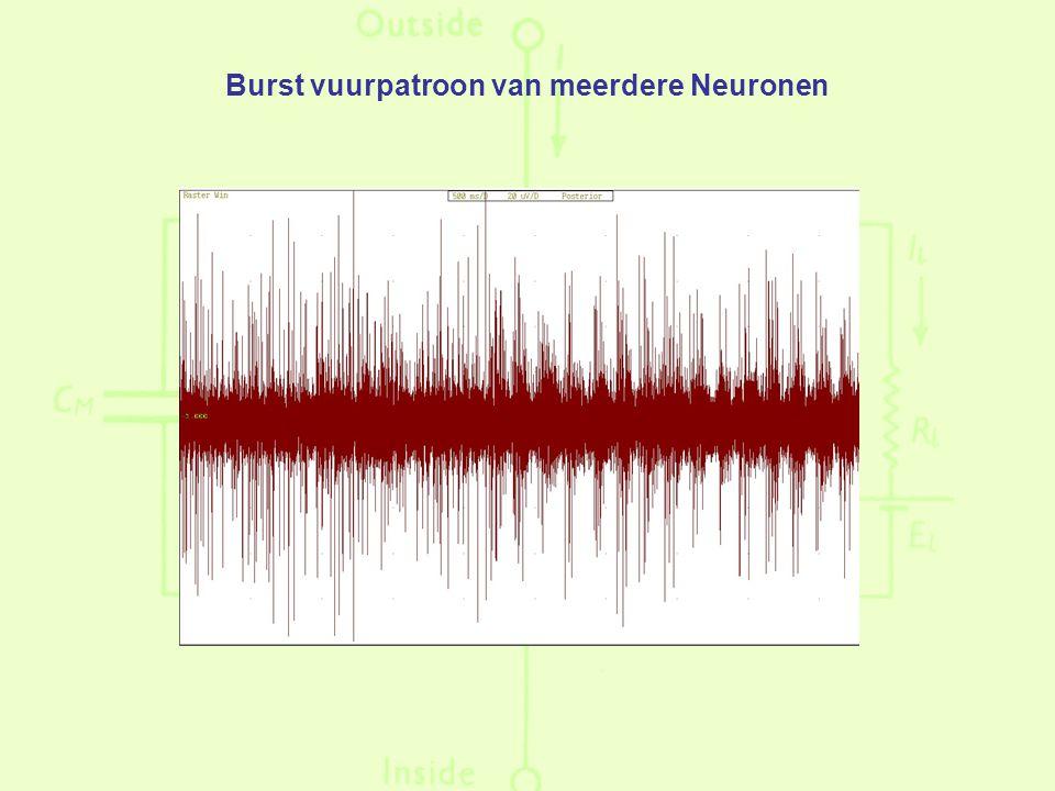 Burst vuurpatroon van meerdere Neuronen