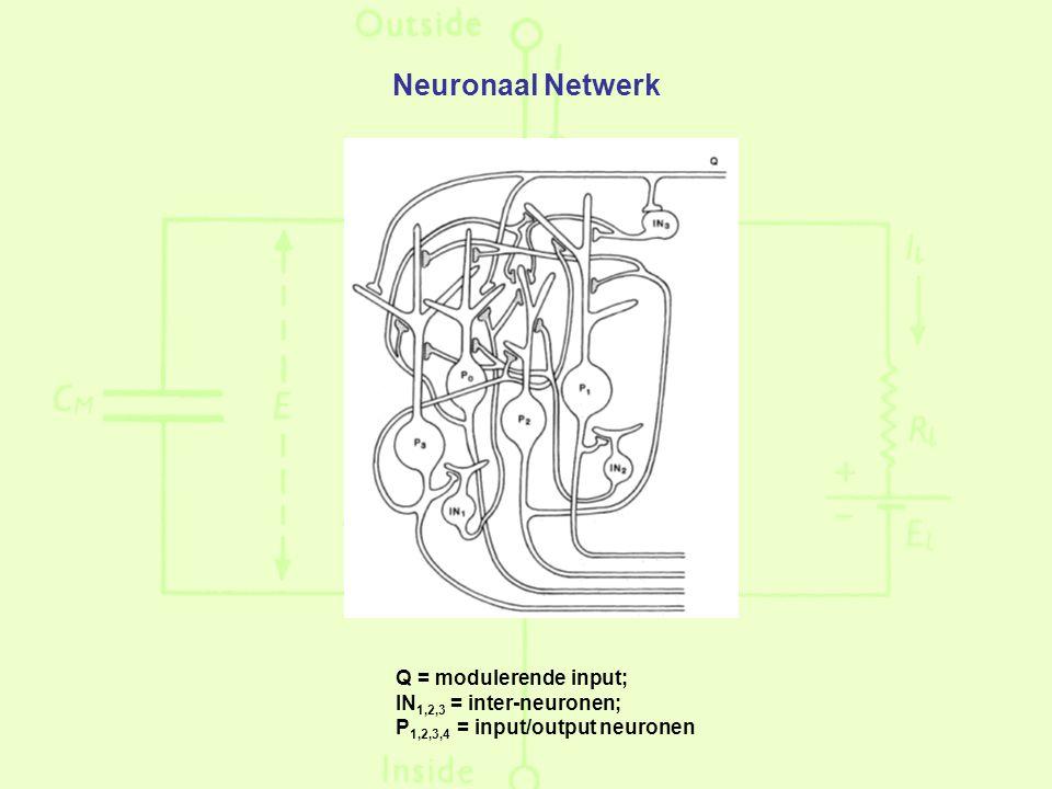 Neuronaal Netwerk Q = modulerende input; IN 1,2,3 = inter-neuronen; P 1,2,3,4 = input/output neuronen