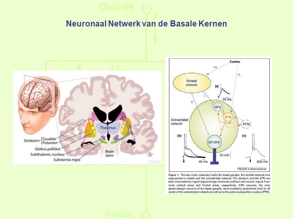 Neuronaal Netwerk van de Basale Kernen