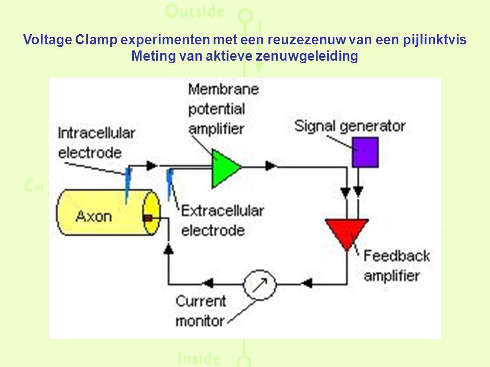 Voltage Clamp experimenten met een reuzezenuw van een pijlinktvis Meting van aktieve zenuwgeleiding