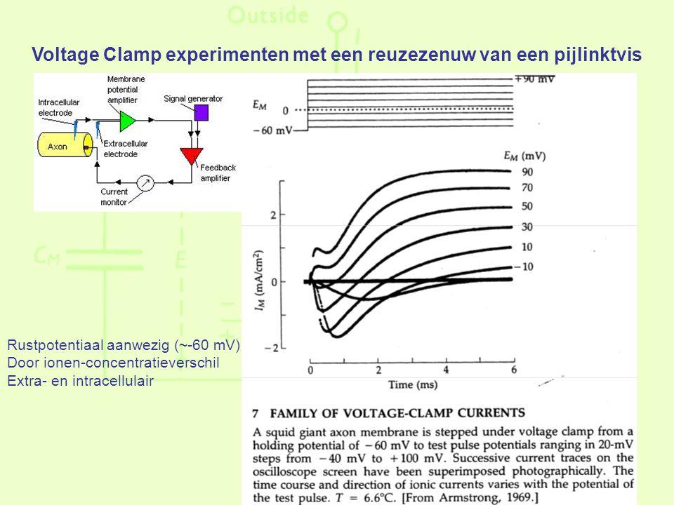 Voltage Clamp experimenten met een reuzezenuw van een pijlinktvis Rustpotentiaal aanwezig (~-60 mV) Door ionen-concentratieverschil Extra- en intracellulair