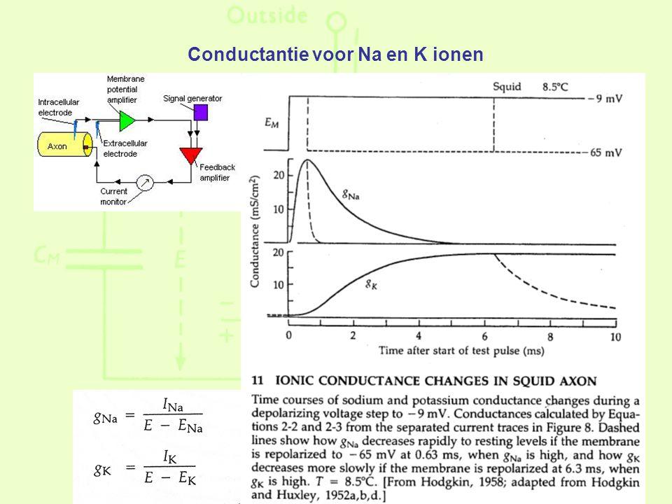 Conductantie voor Na en K ionen
