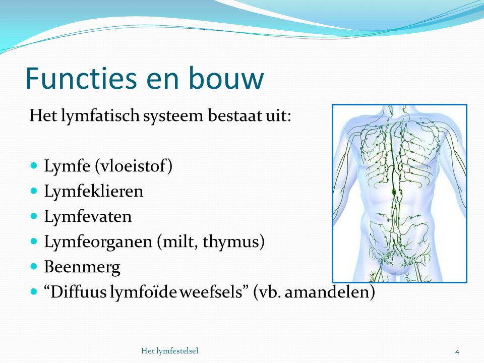 """Functies en bouw Het lymfatisch systeem bestaat uit: Lymfe (vloeistof) Lymfeklieren Lymfevaten Lymfeorganen (milt, thymus) Beenmerg """"Diffuus lymfoïde"""
