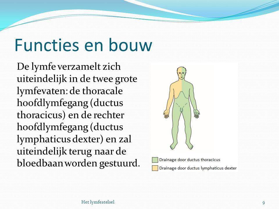 Functies en bouw De lymfe verzamelt zich uiteindelijk in de twee grote lymfevaten: de thoracale hoofdlymfegang (ductus thoracicus) en de rechter hoofd