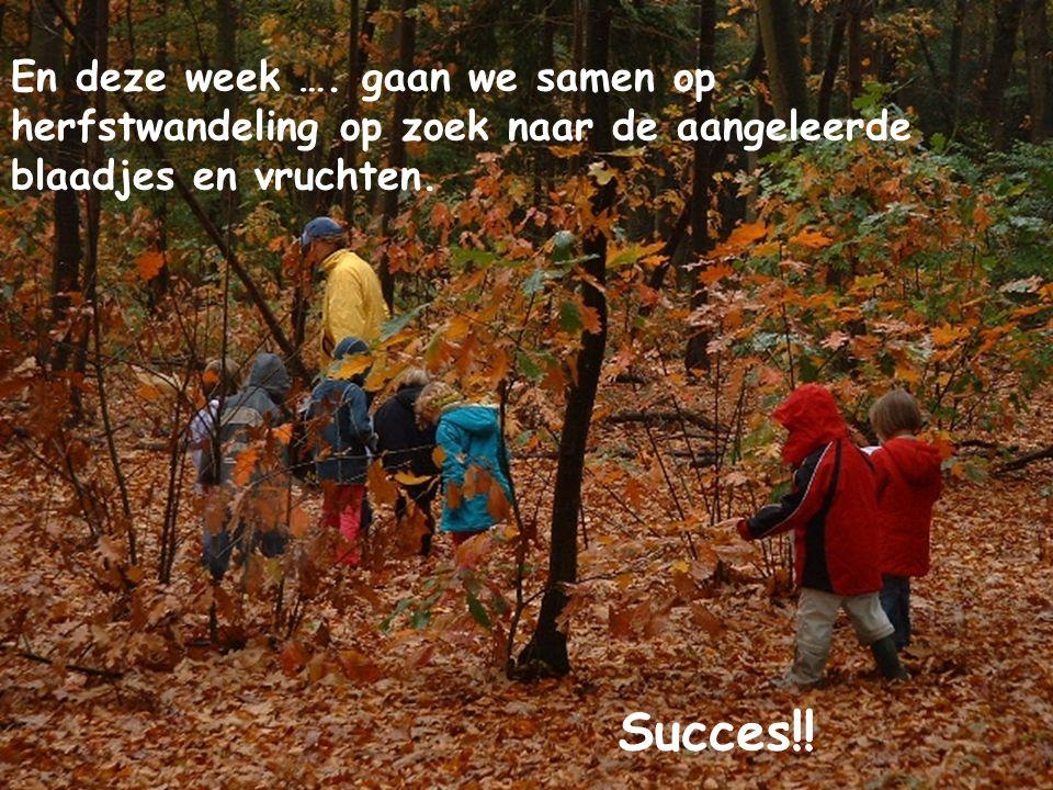 En deze week …. gaan we samen op herfstwandeling op zoek naar de aangeleerde blaadjes en vruchten. Succes!!