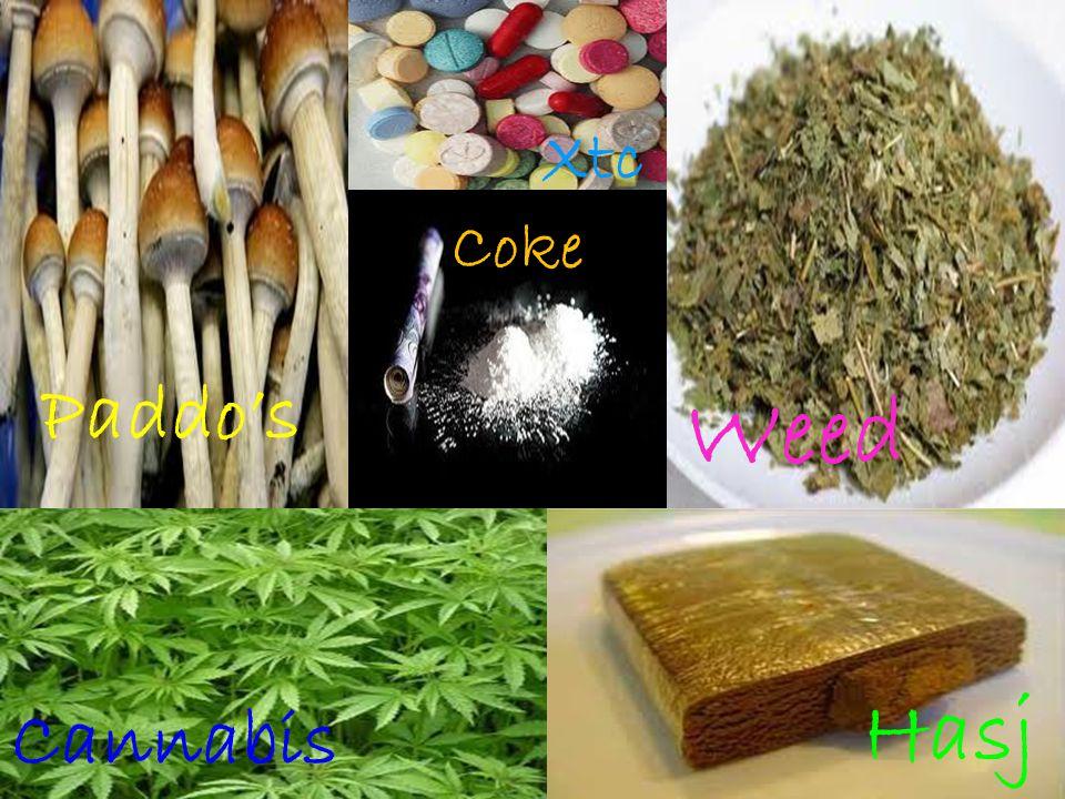 Paddo's Coke Xtc Weed Hasj Cannabis