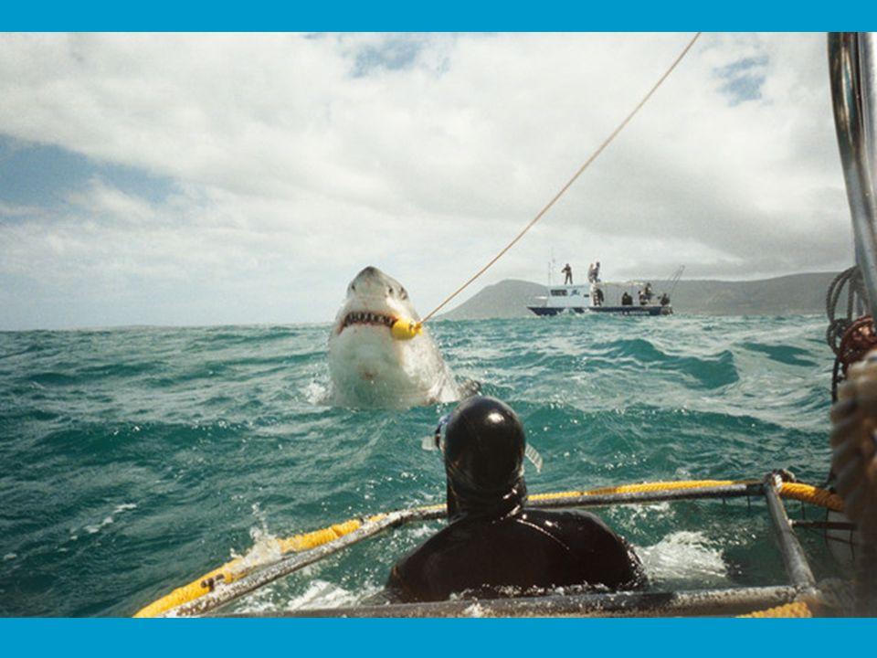 MAAR … het zijn niet altijd de haaien die winnen.