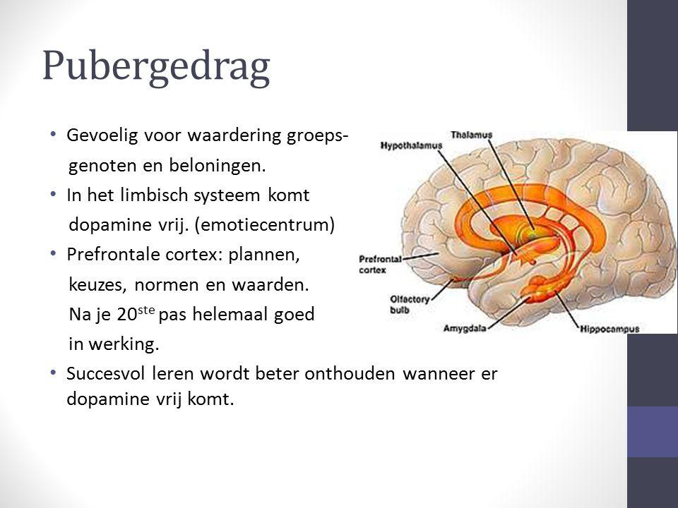 Pubergedrag Gevoelig voor waardering groeps- genoten en beloningen. In het limbisch systeem komt dopamine vrij. (emotiecentrum) Prefrontale cortex: pl