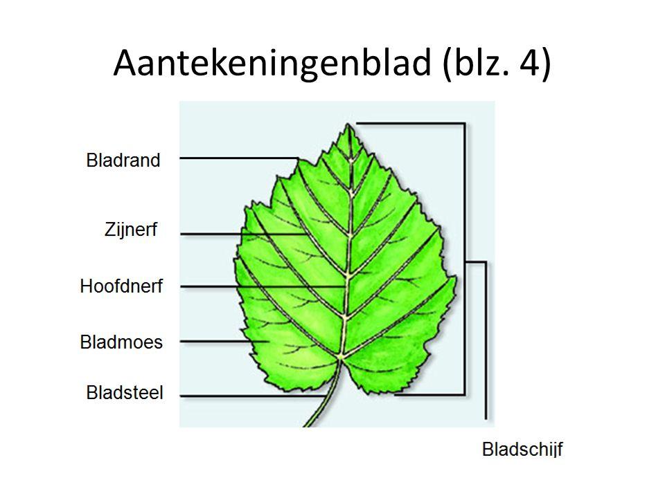 bladskelet