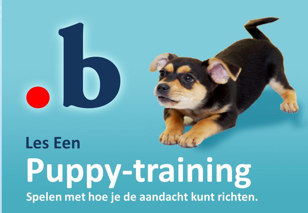 Puppy-training Les Een Spelen met hoe je de aandacht kunt richten.