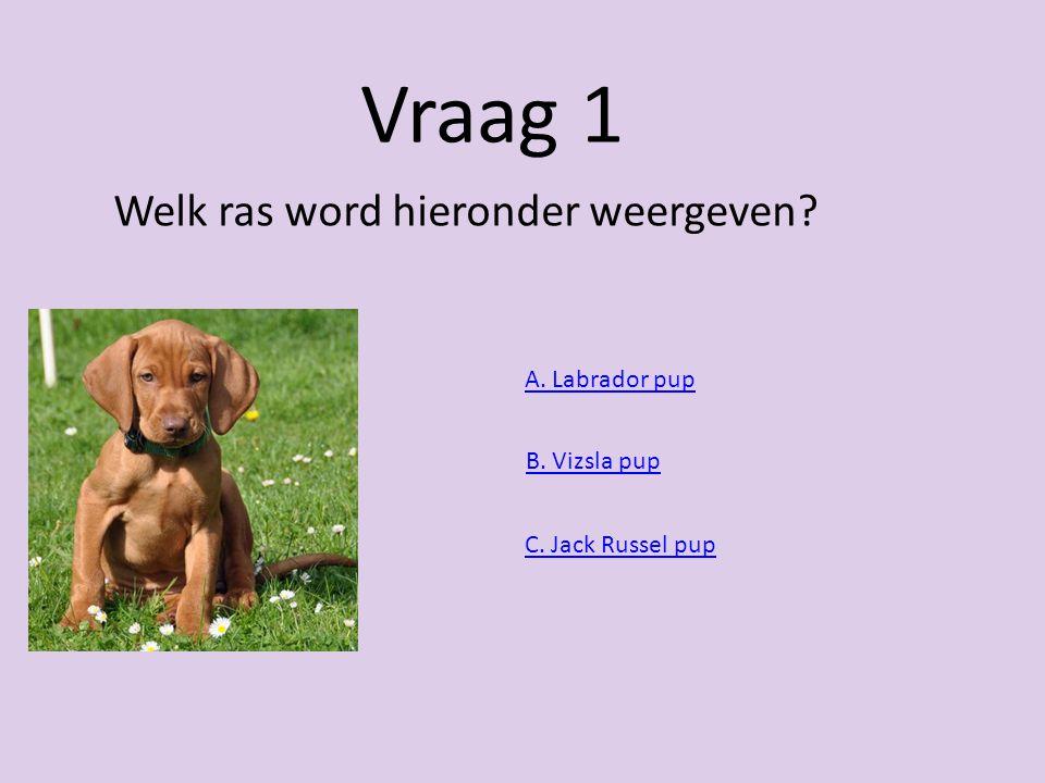 Honden quizz Naam: Lynn Rijkse Klas: 4B Docent: Mnr. Waleson