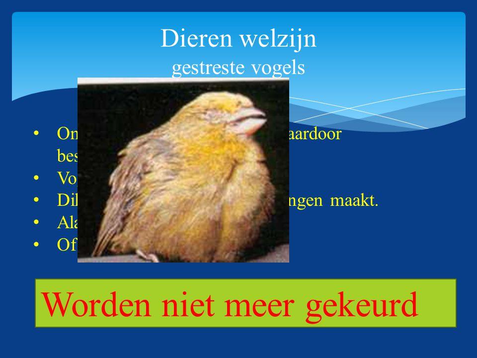 Dieren welzijn gestreste vogels Onrustige vogels die zichzelf daardoor beschadigen. Vogel die zich zelf plukt. Dik zit of onnatuurlijke bewegingen maa