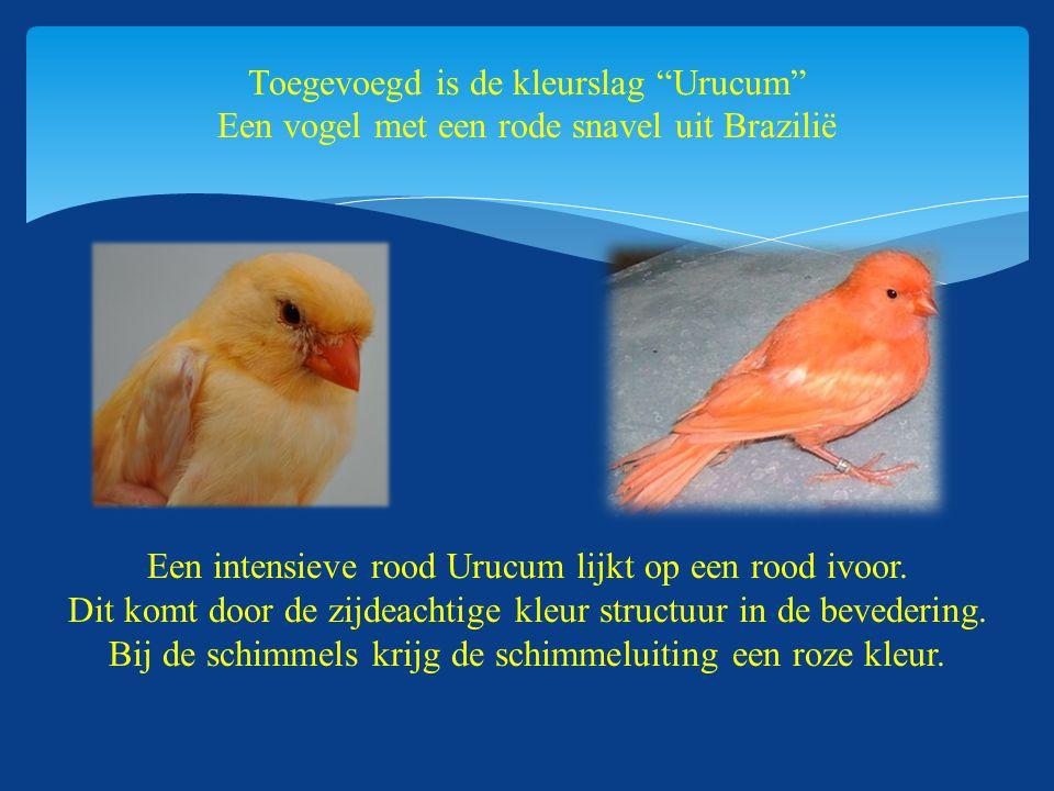 """ Dit komt door Toegevoegd is de kleurslag """"Urucum"""" Een vogel met een rode snavel uit Brazilië Een intensieve rood Urucum lijkt op een rood ivoor. Dit"""
