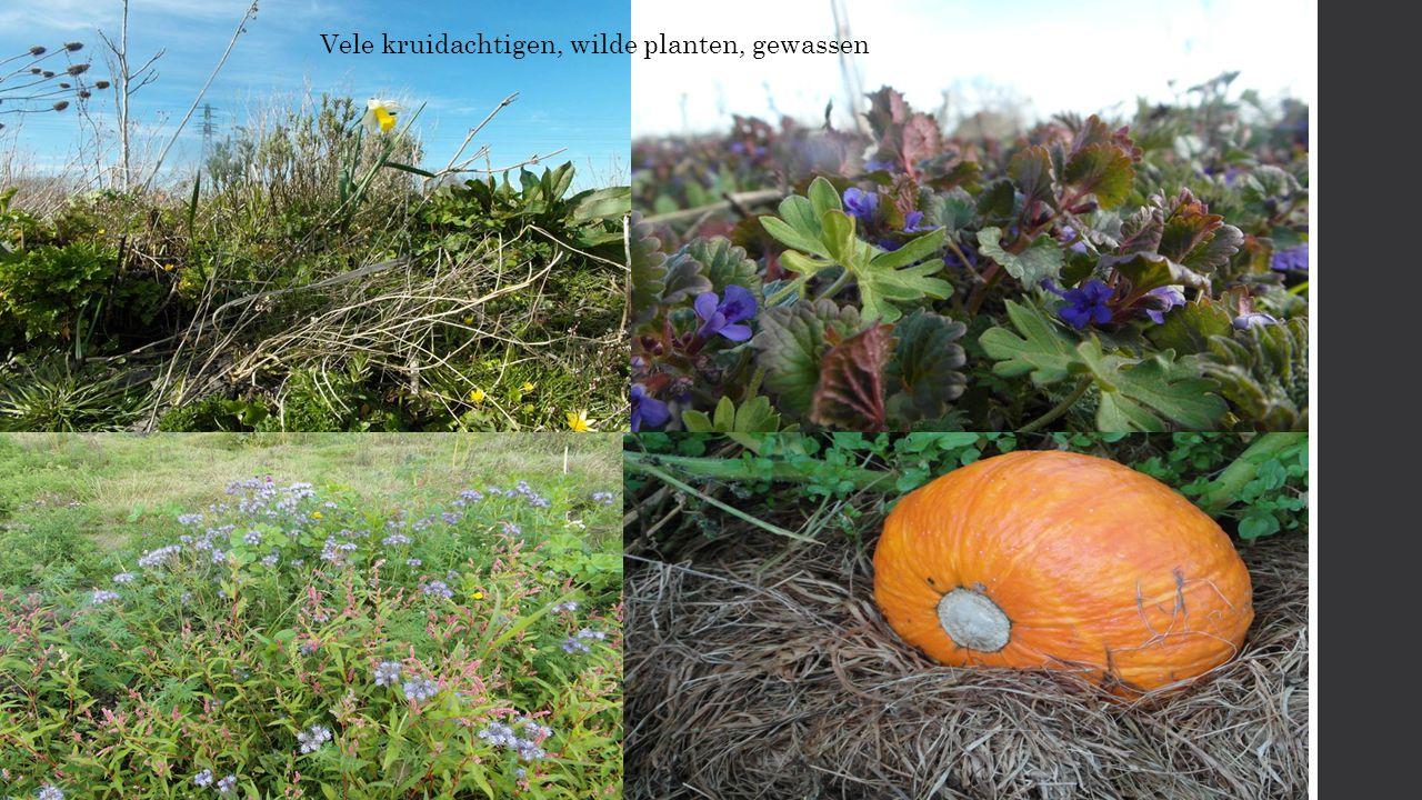 Vele kruidachtigen, wilde planten, gewassen.
