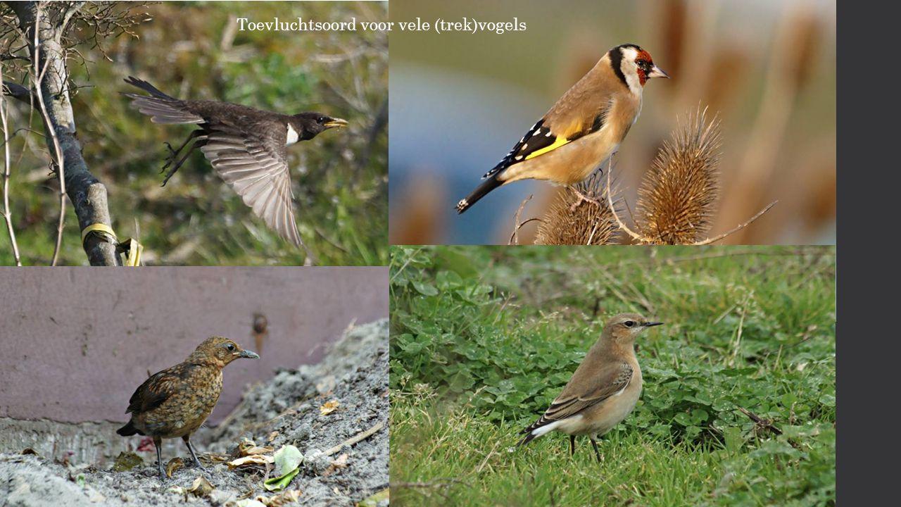 Toevluchtsoord voor vele (trek)vogels